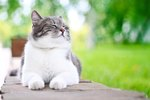 The 300 Top Names For Female Cats