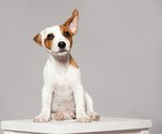 Does Your Dog Need a Hearing Test?