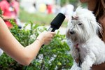 Are City Dogs Unhappy? This Man Interviewed 4000 NYC Dogs And Their Owners to Find Out