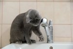 Why Is My Cat Obsessed With Water?