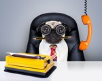 18 Office Dogs Hard At Work Officing