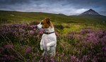220 Irish Names Your Dog Would Be Lucky To Have