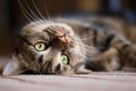 How to Get Rid of Fleas From Cats with a Natural Home Remedy
