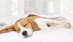 Signs of Head Trauma in Dogs