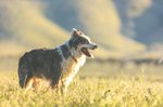 155 Uplifting Country Western Names For Dogs