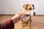 How Do I Train a Dog Who Isn't Food Motivated?