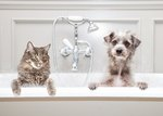 Ears To Rears: DIY Spring Cleaning Checklist For Your Smelly Pets