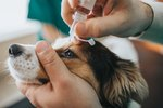 Home Remedies for Styes on Dogs' Eyelids