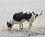 How to Induce Vomiting in Dogs With Salt