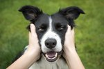 170 One-Syllable Dog Names