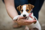 What Does it Mean If a Dog Chews On Your Hand?