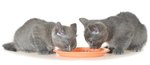 What To Do When Your Cat Throws Up After Eating