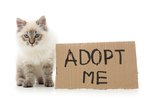 15 Things You Can Buy For The Same Price As Adopting A Cat