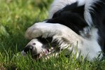 Why Dogs Cover Their Faces With Their Paws