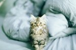 A Home Remedy for Military Dermatitis in Cats