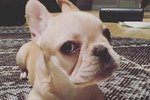 11 Times Hilary Duff's Dog Was a Gift to Us All
