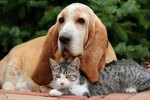 11 Dog Breeds That Get Along With Cats