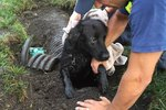This Poor Dog Spent a Week In a Storm Drain & Lived!