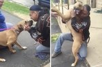 Watch This Stolen Dog Reunite With His Owner After 2 Years