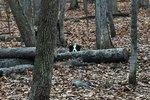17 Dogs Spying On You Is The Best Thing Ever