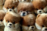 15 Animals That Look Like Literal Stuffed Animals