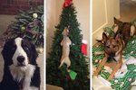 12 Dogs Who Adorably Ruined The Holidays