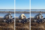 Polar Bear And Dog Prove That America Can Be Friends Again