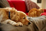 9 Tips For Minimizing Pet Dander