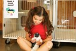 About Animal Fostering