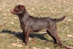 About Patterdale Terriers