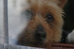 Are Dogs Negatively Affected by Changing Homes?