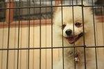 Are Dog Crates Humane?