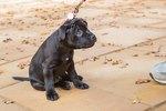 Basic Puppy Training Tips