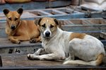 Behaviors of Stray Dogs