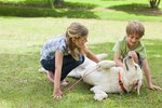 Benefits of Raising Children With Dogs