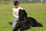 Big Dogs that Are Kid Friendly