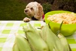 Can Dogs Eat Corn on the Cob?
