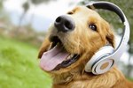 Can Dogs Like Music?
