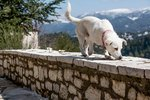 Can Dogs Smell Their Way Back Home?