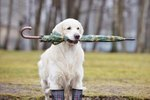 Can Weather Affect a Dog's Behavior?