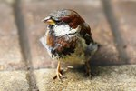 Can Wild Birds Be Tamed and Kept As Pets?