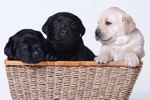 Choosing the Right Puppy For You