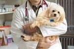 Canine Cytopenia