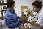 Metronidazole Side Effects In Dogs Cuteness