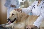 Canine Leiomyoma