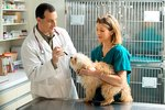 Canine Respiratory Disorders