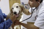 Canine Tuberculosis