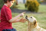 Caring For Senior Dogs With Hearing Loss