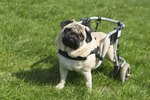 Caring for a Disabled Dog