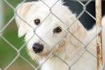 Common Behavior Problems of Rescue Dogs